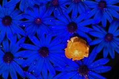 BDM2013-07-2.Platz-Die_Farbe_Blau-Gerd