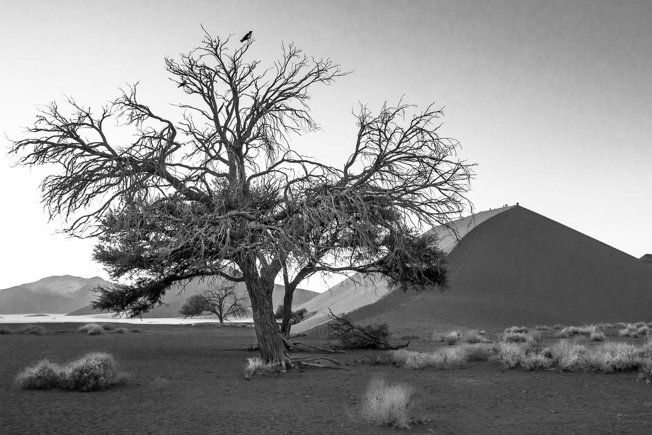 2012-Namibia.Düne_45