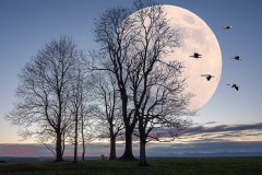 Bank mit Mondblick