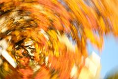 Herbstwirbel