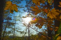 MichaelS-Blaetter-Herbst-im-Gegenlicht-1Y8A7212-klein