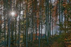 Herbst im morgendlichen Buchenwald