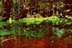 Wald am und im Eibsee